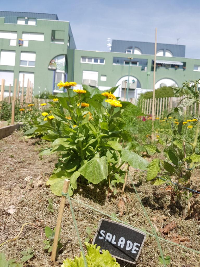jardins partagés permaculture
